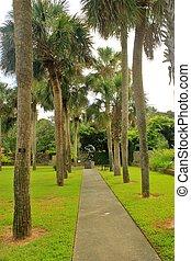 Palmetto palms 3 - Palmetto palms growing in Brookgreen ...