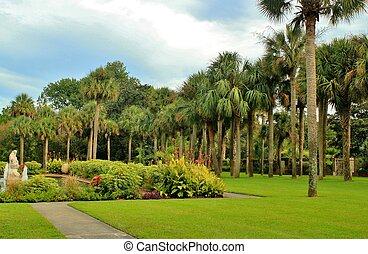 Palmetto palms growing in Brookgreen Gardens near Myrtle Beach South Carolina