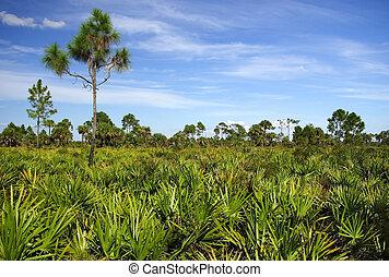palmetto, pijnbomen, zaag, &