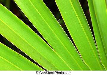 palmetto, zaag, achtergrond