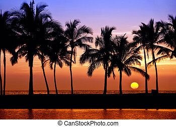 palmier, coucher soleil, hawaien