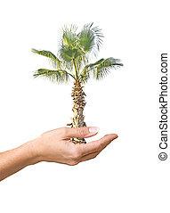 palmier, dans, main, comme, a, symbole, de, nature, potection