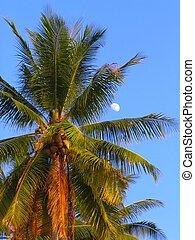 palmier, lune