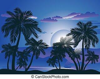 palmier, nuit