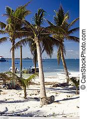 palmiers, mexique