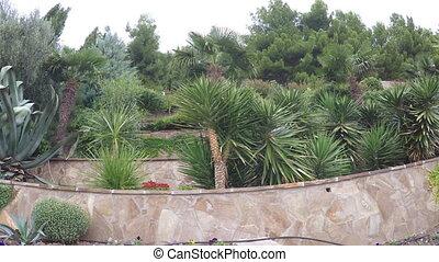 palmiers, parterres fleurs