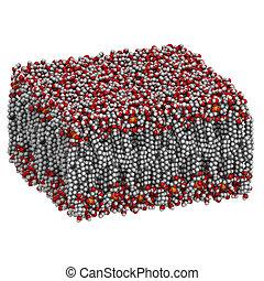 palmitoyloleoylphosphatidylcholine, (popc), molecul, bilayer, lipid