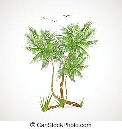 palmizi, illustrazione