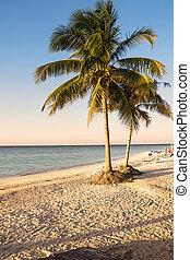 palmizi, spiaggia, di, uno, isola tropicale, in, cuba, (cajo, jutias)