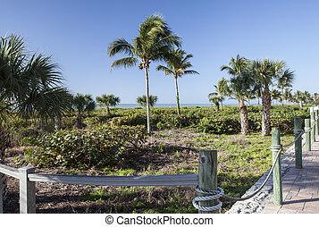 palmizi, su, isola sanibel