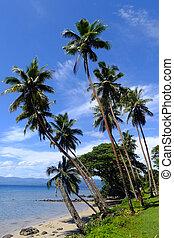 palmizi, su, uno, spiaggia, vanua, levu, isola, figi