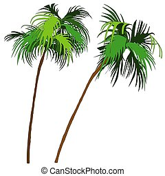 Palms 1 - two colored palm-tree illustration
