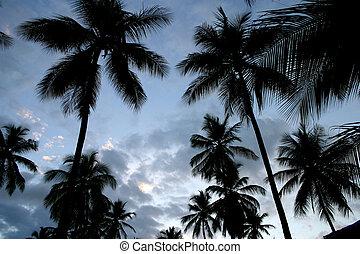 Palms 2 - Palms at dusk