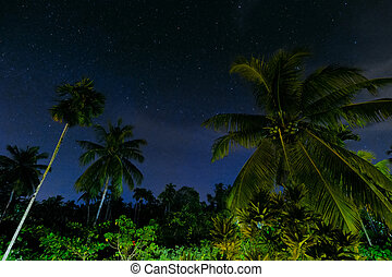 Palms Against The Starry Sky At Night