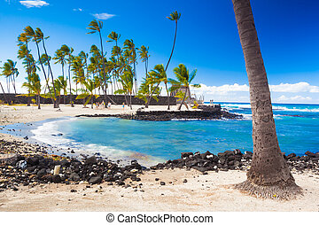 Palms and ancient Hawaiian dwellings - Palm trees growing on...