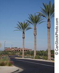Palms and Clubhouse - Palm trees line entrance to new...