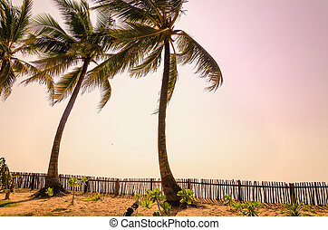 Palms and purple sky at sunset on exotic islands