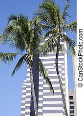 Palms and Skyscrapers