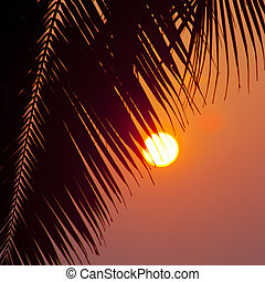 Palms and sun, tropical sunset taken in Goa, India