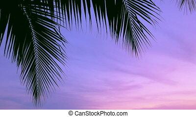 Palms and sunset sky, tropical sunset with cicadas sound, 3...