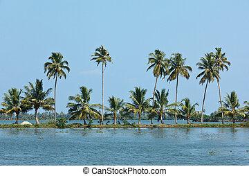 Palms at Kerala backwaters. Kerala, India. This is very ...