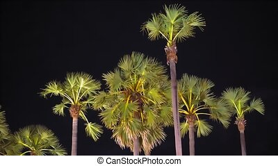palms at night in the street lighting of the city. tropical Asia, nightlife.