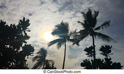 Palms at sunny day