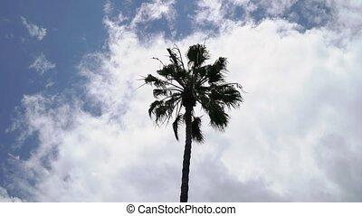 Palms at the beach coastline