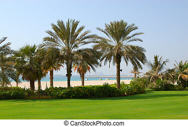 Palms at the beach of luxury hotel, Dubai, UAE