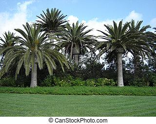 Palms - California palms and blue sky