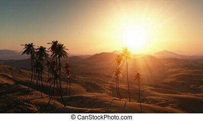 palms in desert at sunset