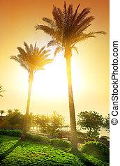 Palms in hotel
