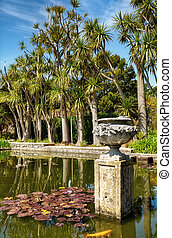 Palms in Logan Botanic Gardens - Palms and a pond with Lily...