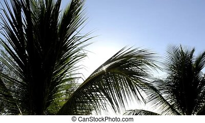 Palms in the wind 243