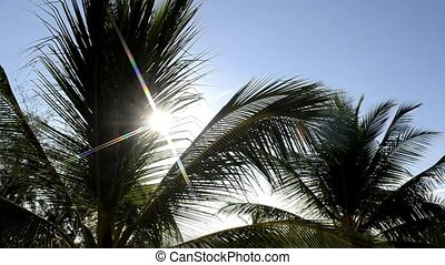 Palms in the wind 244