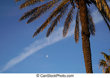 Palms, moon and jet steam on blue sky background