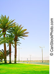 Palms near highway