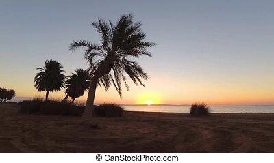Palms on beach swaying on wind
