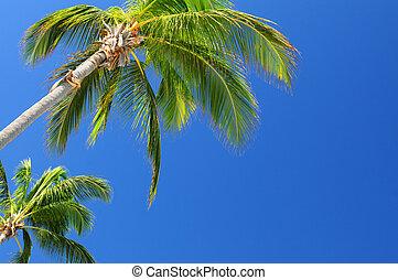 Palms on blue sky - Tropical background of palms on blue sky