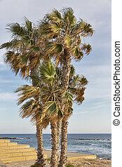 Palms on sea beach