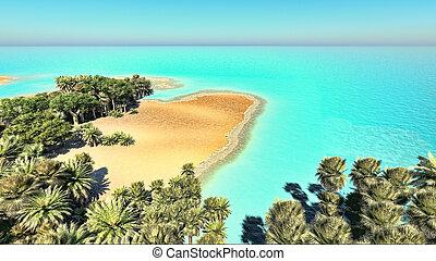 Palms on the tropical beach