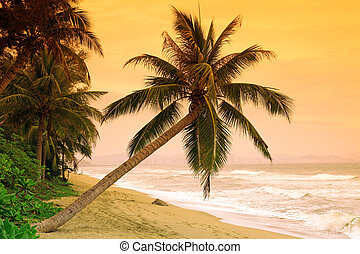 Palms on tropic island
