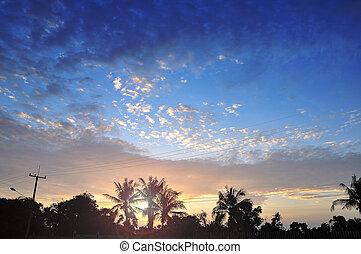 palms scenery