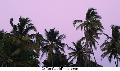 Palms. Set of 3 clips.