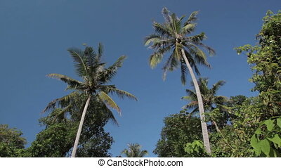 palms in Thailand