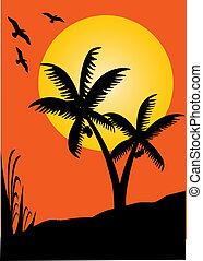 palms sunset dream