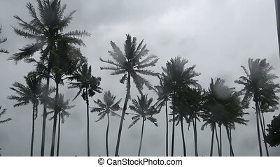 Palms tree at monsoon in tropical island . - Palms tree at...