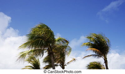 palms trees in south beach in miami, florida