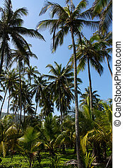 Palms. Tropical forest. Caribbean