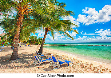 Barbados - Palms with sunbeds on the white beach and a...